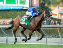 Pegasus betting 2020